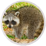 Raccoon Round Beach Towel by Millard H Sharp