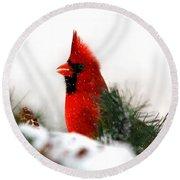 Red Cardinal Round Beach Towel by Christina Rollo