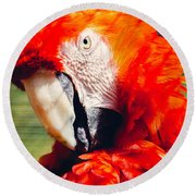 Red Macaw Closeup Round Beach Towel by Pati Photography