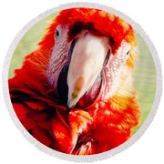 Red Macaw Round Beach Towel by Pati Photography