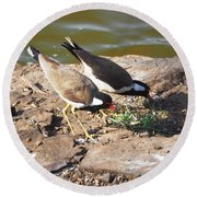 Red-wattled Lapwing Round Beach Towel by C H Apperson
