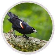 Red-winged Blackbird Round Beach Towel by Christina Rollo