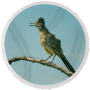 Roadrunner Out On A Limb Round Beach Towel by Robert Frederick