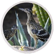 Roadrunners At Play  Round Beach Towel by Saija  Lehtonen