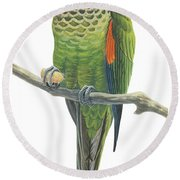 Rock Parakeet Round Beach Towel by Anonymous