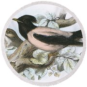 Rose Coloured Starling Round Beach Towel by English School