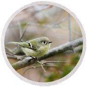 Ruby-crowned Kinglet Round Beach Towel by Christina Rollo