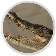 Salt Water Crocodile 1 Round Beach Towel by Bob Christopher