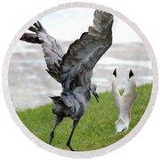 Sandhill Chasing Ibis Round Beach Towel by Carol Groenen