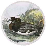 Scaup Duck Round Beach Towel by English School