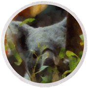 Shy Koala Round Beach Towel by Dan Sproul