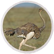 Side Profile Of An Ostrich Running Round Beach Towel by Panoramic Images