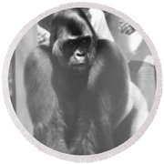 Silverback Gorilla In The Zoo Round Beach Towel by Dan Sproul