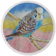 Sky Blue Budgie Round Beach Towel by Michael Creese