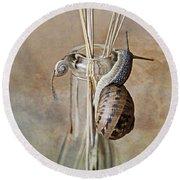 Snails Round Beach Towel by Nailia Schwarz