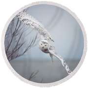 Snowy Owl In Flight Round Beach Towel by Carrie Ann Grippo-Pike