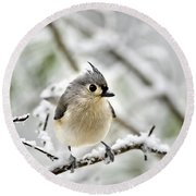 Snowy Tufted Titmouse Round Beach Towel by Christina Rollo