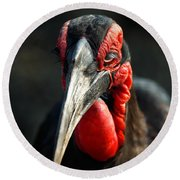 Southern Ground Hornbill Portrait Front View Round Beach Towel by Johan Swanepoel