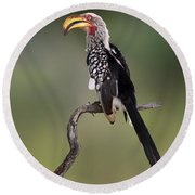 Southern Yellowbilled Hornbill Round Beach Towel by Johan Swanepoel