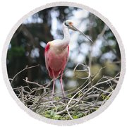 Spoonbill In The Branches Round Beach Towel by Carol Groenen