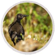 Starling Round Beach Towel by Guido Montanes Castillo