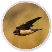First Swallow Of Spring Round Beach Towel by Robert Frederick
