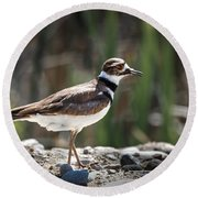 The Killdeer Round Beach Towel by Robert Bales