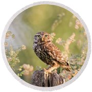 The Little Owl Round Beach Towel by Roeselien Raimond