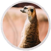 The Lonely Meerkat Round Beach Towel by Pati Photography