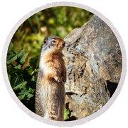The Marmot Round Beach Towel by Robert Bales