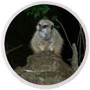The Meerkat Round Beach Towel by Chalet Roome-Rigdon