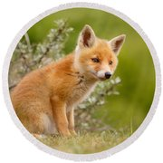 The New Kit ...curious Red Fox Cub Round Beach Towel by Roeselien Raimond