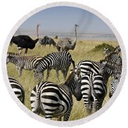 The Odd Couple Round Beach Towel by Michele Burgess