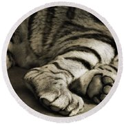 Tiger Paws Round Beach Towel by Dan Sproul