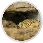 Toad In The Hole Round Beach Towel by Heather Applegate