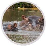 Two Hippopotamus Hippopotamus Amphibius Round Beach Towel by Panoramic Images