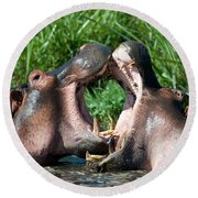 Two Hippopotamuses Hippopotamus Round Beach Towel by Panoramic Images