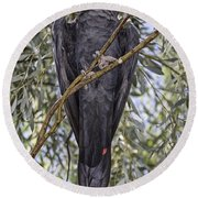 What Are You Looking At Round Beach Towel by Douglas Barnard
