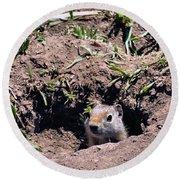 Ground Squirrel Round Beach Towel by Dan Sproul