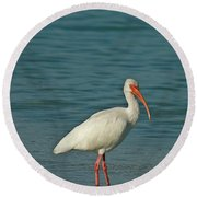 White Ibis Round Beach Towel by Cindi Ressler