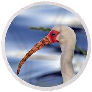 Intriguing Ibis Round Beach Towel by Al Powell Photography USA