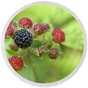 Wild Berries Round Beach Towel by Christina Rollo