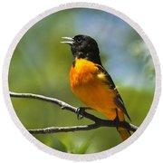 Wild Birds - Baltimore Oriole Round Beach Towel by Christina Rollo