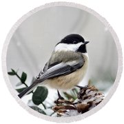 Winter Chickadee Round Beach Towel by Christina Rollo