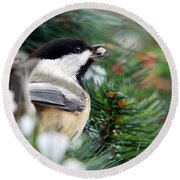 Winter Chickadee With Seed Round Beach Towel by Christina Rollo