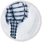 X Ray Of A Seahorse Round Beach Towel by American School