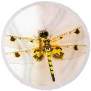 Yellow Dragonfly Pantala Flavescens Round Beach Towel by Iris Richardson