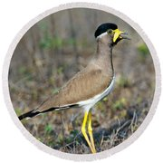 Yellow-wattled Lapwing Vanellus Round Beach Towel by Panoramic Images