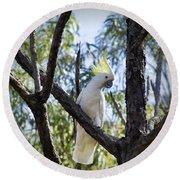 Sulphur Crested Cockatoo Round Beach Towel by Douglas Barnard