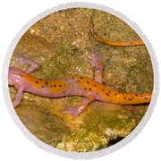 Cave Salamander Round Beach Towel by Dante Fenolio